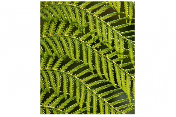 The Finer Detail of a Tree Fern